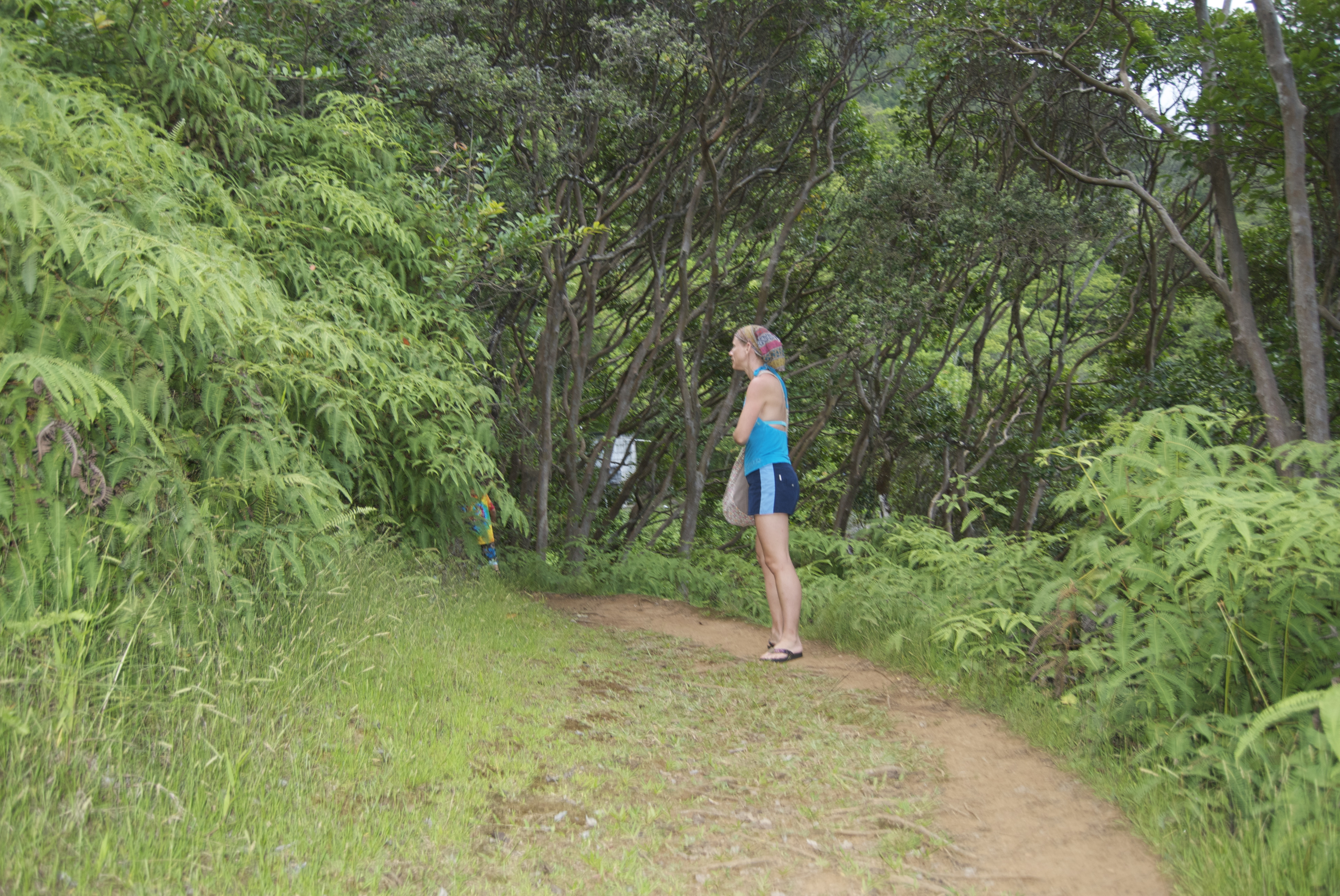 Mud, Rain, Rocks and Roots! The Maunawili Demonstration Trail ...
