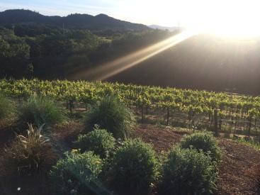 Sunrise in Sonoma